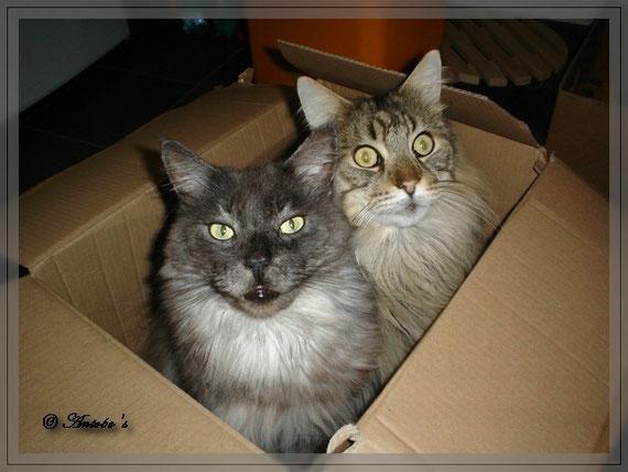 Die Kartonkatzen...