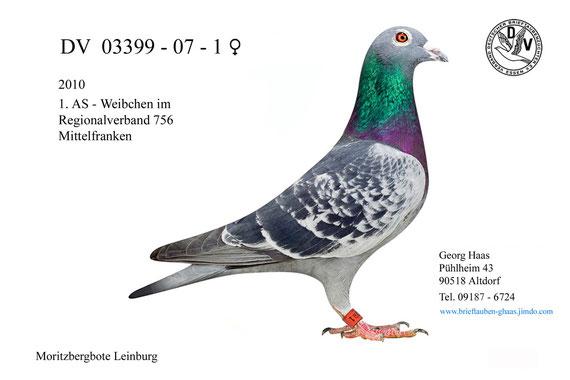 1. AS-Weibchen 2010