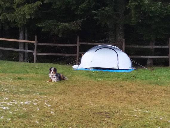 Capone surveille sa tente avec sa balle au col de la loge
