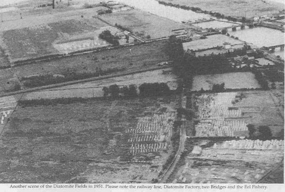 Another view of the Diatomite Fields in 1951. Please note the railway line, Diatomite factory, two bridges, and the eel fishery