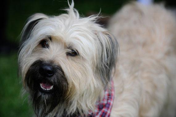 Pippin als Vorzeigehund beim Vortrag :)