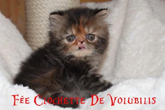 + de photos de Clochette cliquez sur sa photo