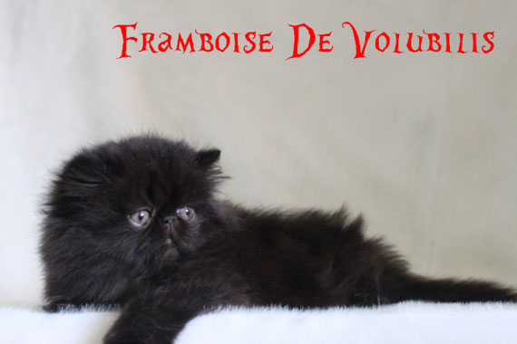 + de photos de Framboise cliquez sur sa photo