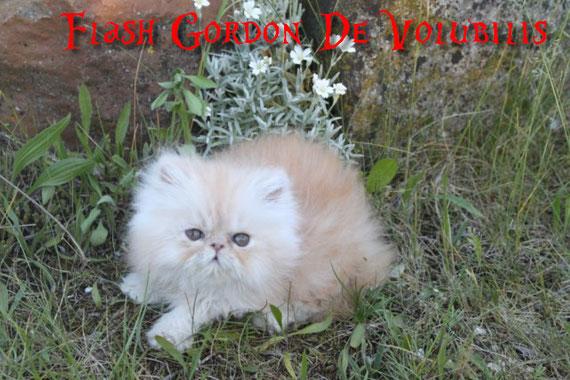 + de photos de Flash Gordon cliquez sur sa photo