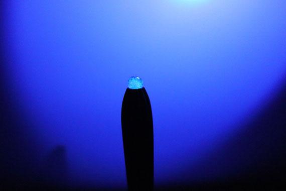 カラクイが光るため、ライブ会場などの暗い場所では、三線がさらに映えることに違いありません。