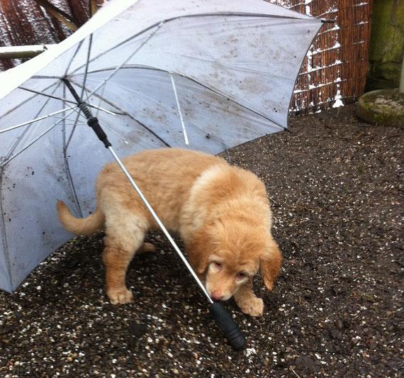 vielleicht hilft der Regenschirmtanz von Booker, um endlich den Frühling herbeizurufen???, 21.03.2013 - keine Sonne in Sicht....