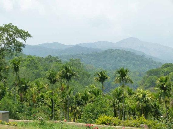 Kaffeeplantagen und Pfefferbäume soweit das Auge sieht