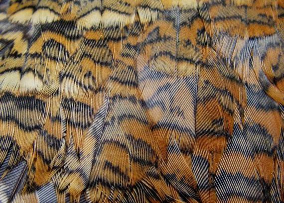 On peut utiliser la plume de  bécasse pour les ailes du sedge.