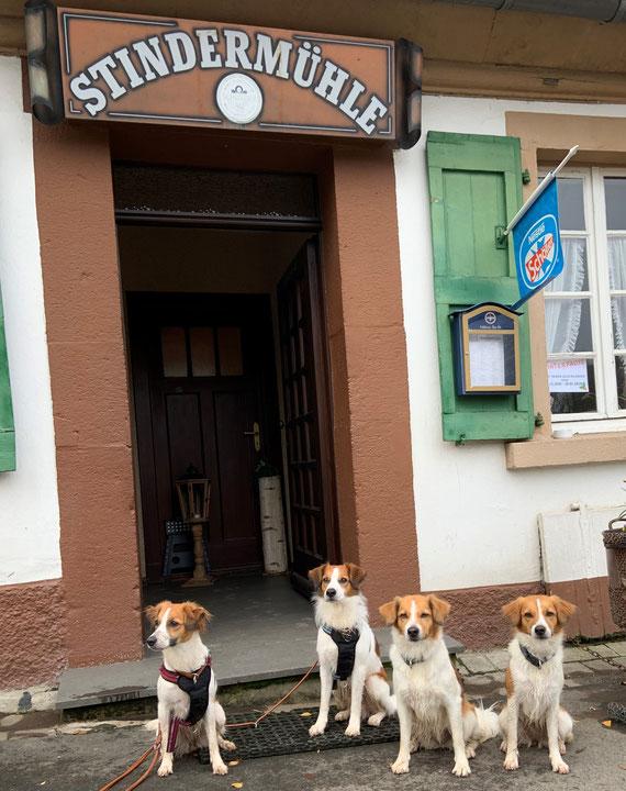 Believe, Cosmo, Beetje und Bea an der Stindermühle im Stindertal (30.11.2019)