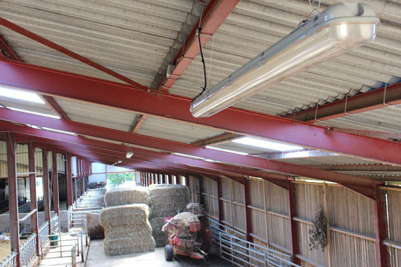 Pose de réglette d'éclairages dans une exploitation agricole