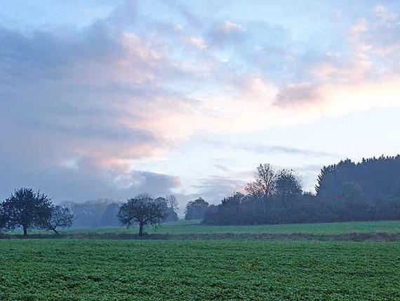 Morgenrot über dunklen Büschen und Bäumen auf der Schwäbischen Alb
