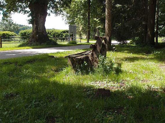 verwitterte, von der Sonne beschienene Bank unter Bäumen