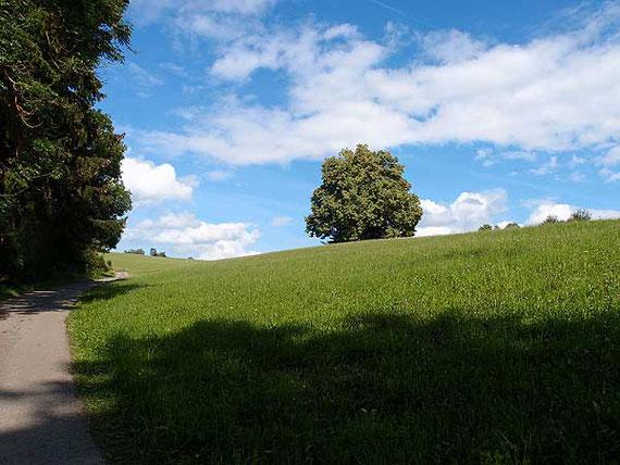 weg durch wiesen mit einzelnen bäumen bei st. johann schwäbische alb