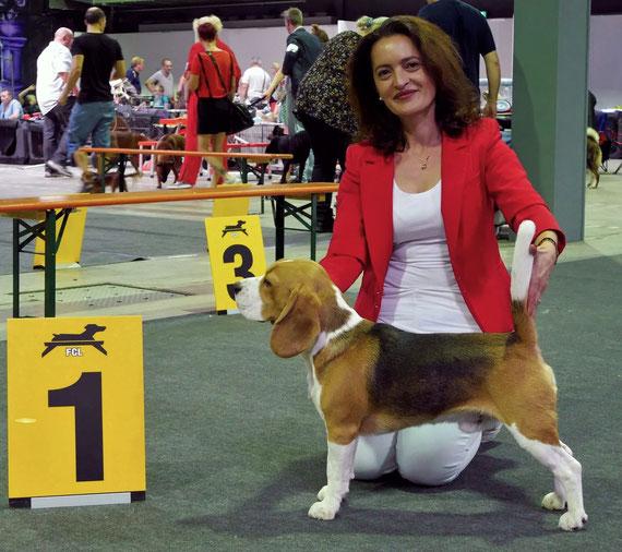 Bagio Boss Gintarine Fortuna * Lord James *, Czarnowsky , Beagle, Beagle, Beagle, Beagle, Beagle