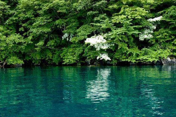 瑠璃色の湖水に映える山ポウシ。
