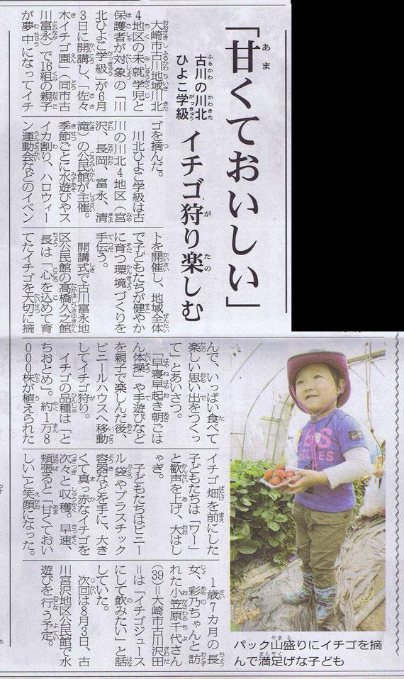 古川川北ひよこ学級「わくわく遠足いちご狩り」大崎こどもタイムス掲載