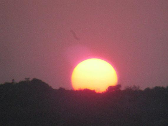 Leopardo al tramonto a Ingwe