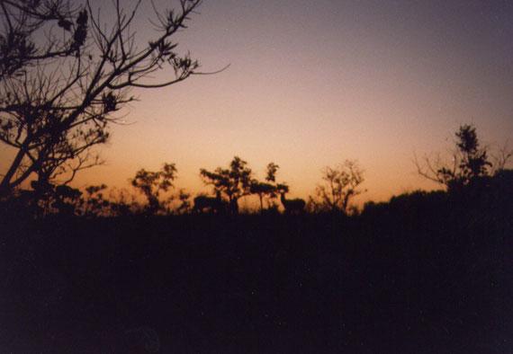 Cobi di Buffon al tramonto. Inizia un'altra notte di cautela e di fughe. Questa foto non ha a che vedere con Ingwe e la scattai in Africa centrale, ma ci sono affezionato perché mi riporta ad un'avventura notturna che ricorderò sempre.
