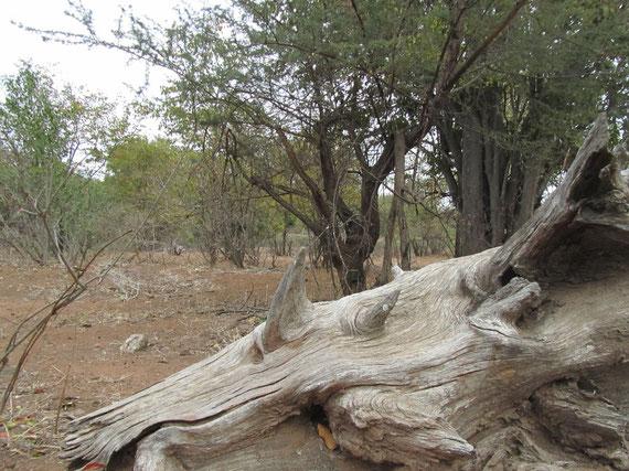 il tronco rinoceronte
