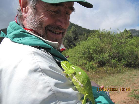 Mamba nero (dendroaspis plylepis). afrikaans:swart mamba. zulu: imamba