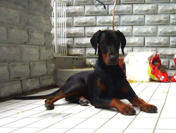 August 2012 - Gulliver ist jetzt Jugendlicher! 9 Mon. jung