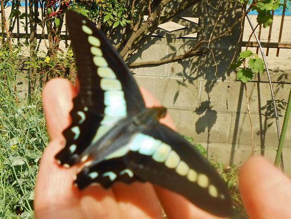 蝶と仲良くなる瞬間