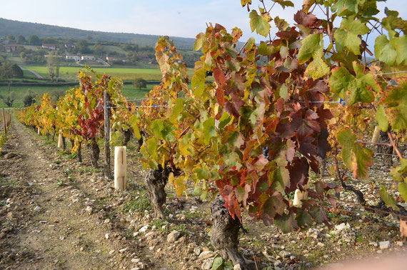 royer, macon rouge, gamay