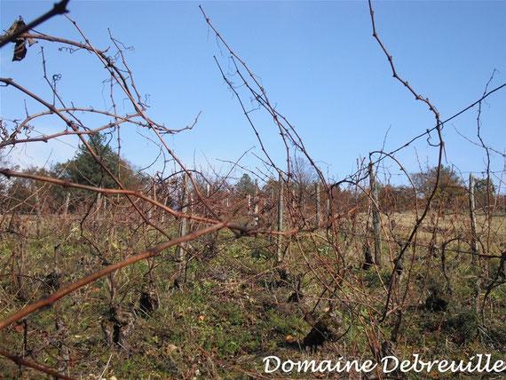 le clos gandin, domaine debreuille, plottes, vin, vigne, fut,  proprietaire recoltant, wine, bourgogne, grape, cepage, chardonnay