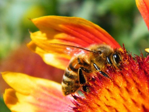 Les abeilles dispensent leur énergie à la nature toute entière...