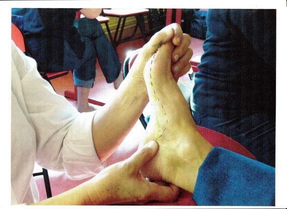 Le pied est une représentation miniaturisée du corps humain (P.Burlaud)