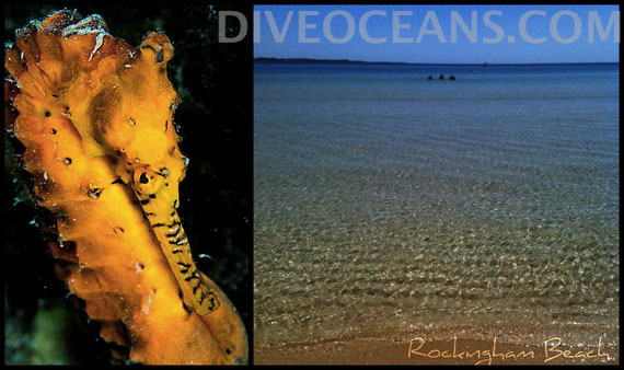 Discover Scuba Diving of Rockingham Beach