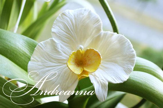 Большая орхидейка (10-12 см)для волос, на зажиме ( крепление, на выбор). (желтая серединка (в любом цвете)Стоимость 150 грн. Такой цветок не увянет у Вас в волосах, в отличие от живого, и будет радовать весь праздник!