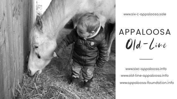 Appaloosa für Kinder | Appaloosa Kinderpferd | Appaloosa Familienpferd | Appaloosa Old-Line  | Appaloosa Old-Foundation | Appaloosa Sport Horse | Appaloosa Black Leopard | By SIX C Appaloosa