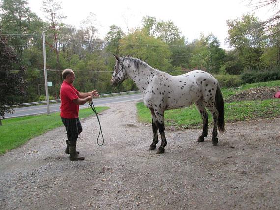 Appaloosa Old-Line | Appaloosa Foundation | Appaloosa Sport Horse | Appaloosa Classic | Foundaloo(sa) | By SIX C Appaloosa