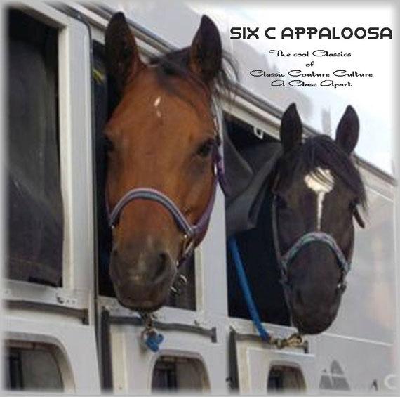 Appaloosa Old-Line   Appaloosa Old-Foundation   Appaloosa Sport Horse   Appaloosa Classic   Foundaloo(sa)   By SIX C Appaloosa
