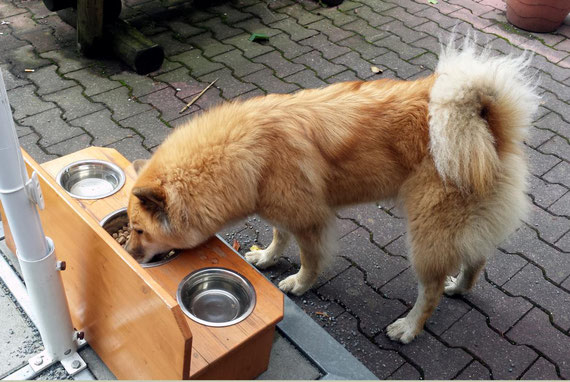 Hanisha an der neuen Hundebar.