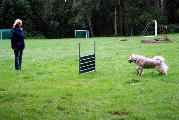 Greta beim Fun-Obedience
