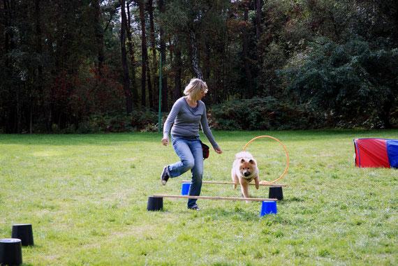Beim Hundesport am Nachmittag gab es viele interessante Läufe durch den Parcours, wo z.B. Holly mit mutigen, aber eleganten Sprüngen die Hürden nahm,...