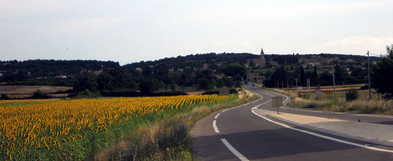 près de Vallon Pont d'Arc - tournesols au matin