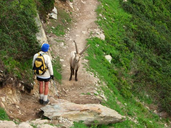 rencontre sur le Tour du Mont Blanc