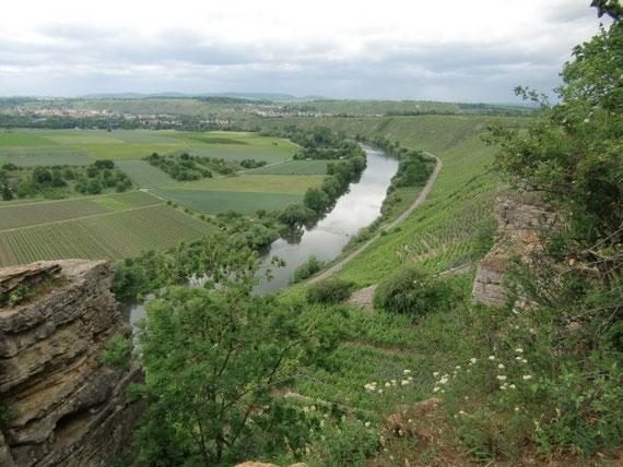 Blick über die Weinberge und den Neckar