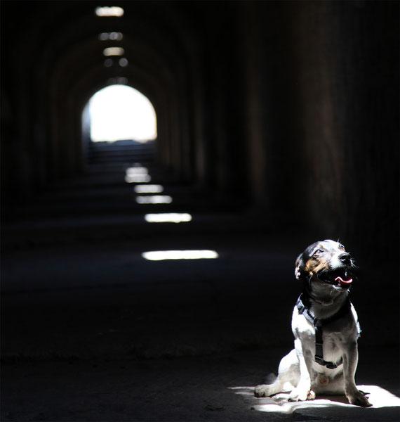 Jonty im unterirdischen Gang von Pergamon.