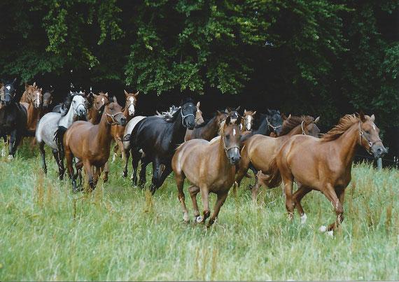 Je mehr Pferde auf engem Raum zusammenkommen, desto größer ist der Wurmdruck
