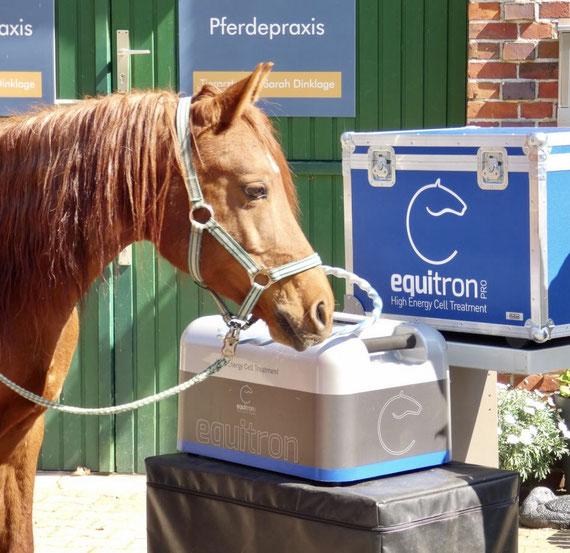 Die Equitron Pro-Therapie ist bei Pferden und Kleintieren sehr beliebt...