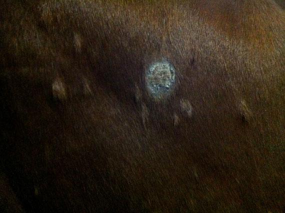 typische kreisrunde Stellen bei Hautpilz