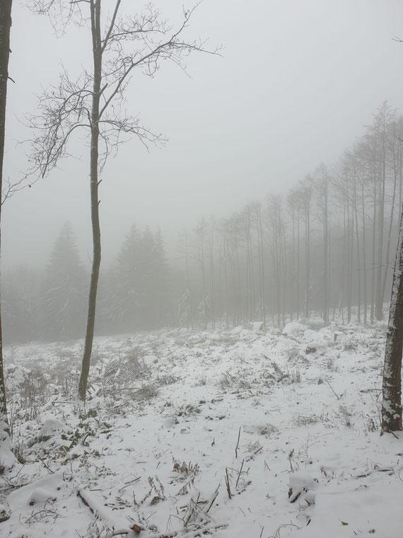 Der Klimawandel legt den Finger in die Wunde: Kahlflächen als Ergebnis holzmarktorientierter  Waldbewirtschaftung in Hessen