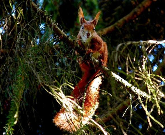 Ein Sonnenbad für das Eichhörnchen
