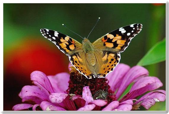 Flora und Fauna schön vereint