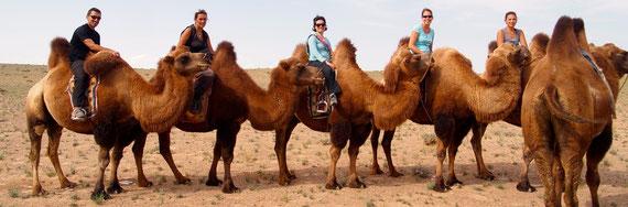 Trek à dos de chameau dans le Gobi