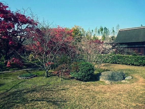 紅葉と普段桜